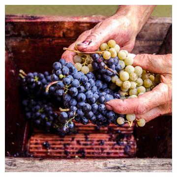 Wine Making for the Hobbyist
